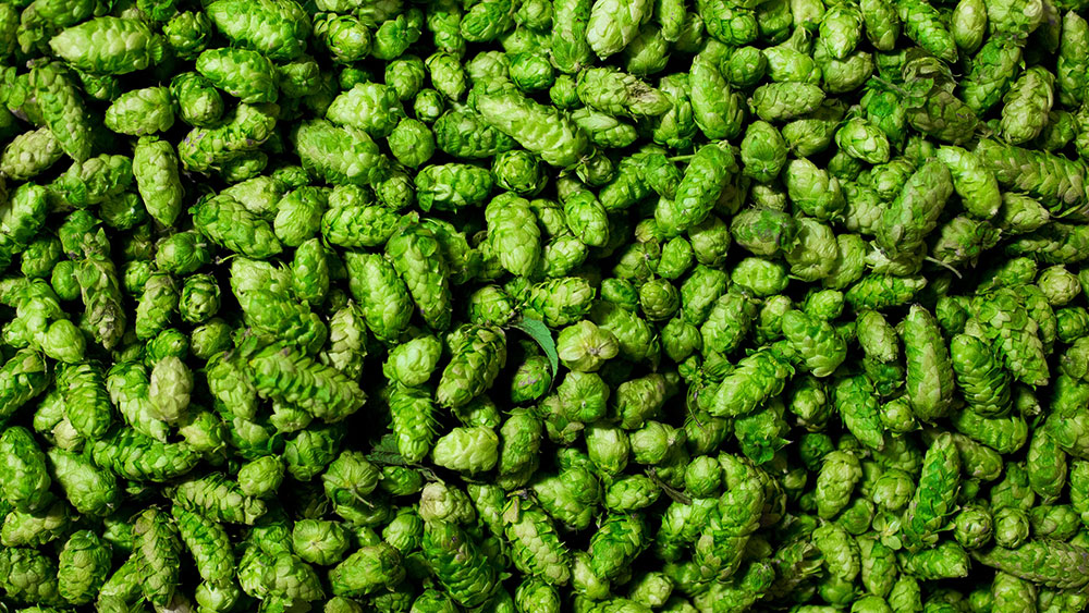 Hops And Their Various Forms